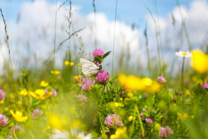 fleurs-jardin-attirent-papillons-17